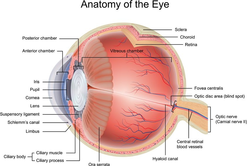 Bateseyeexercises Vision Disorders